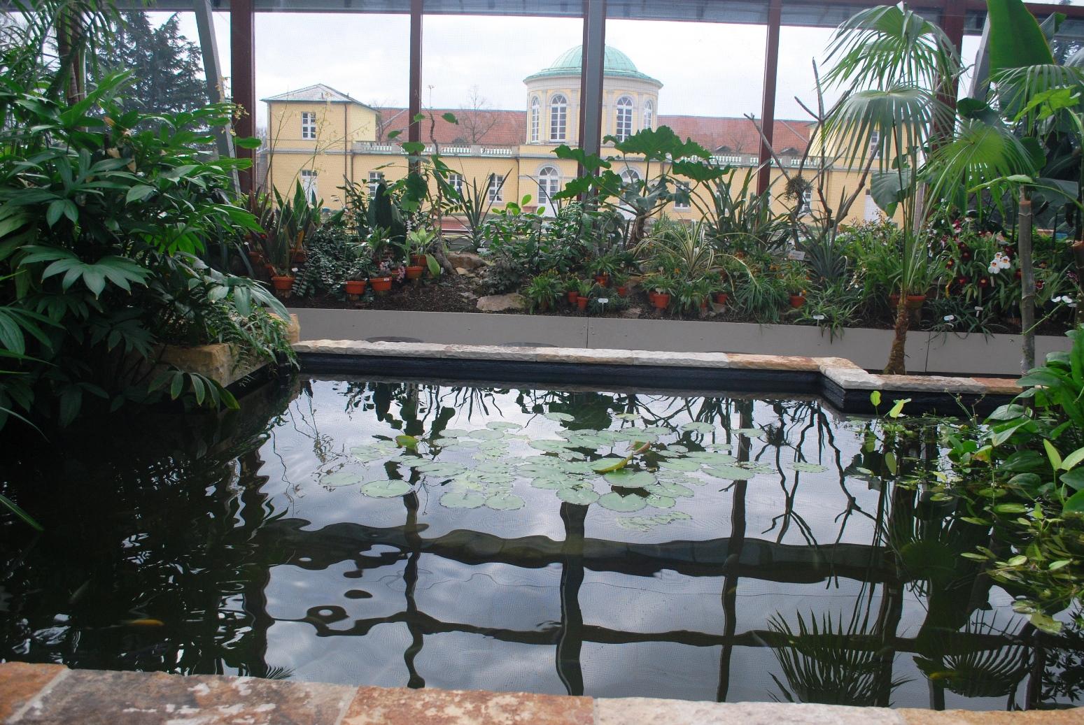 Becken im Tropenhaus DSC_0321