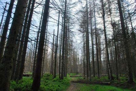 Hexenstieg toter Wald klein DSC_3358