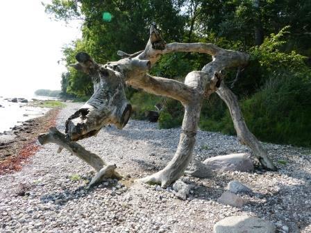 Naturkunst am Strand