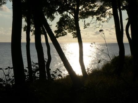 Wald und Wasser im Morgenlicht