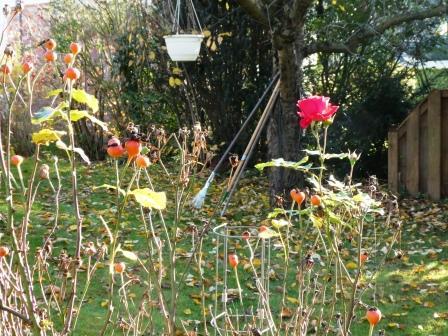 Garten im Herbst P1010170