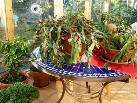 Tisch im Wintergarten P1010166
