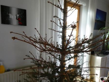 Tannenbaum 2 P1010613