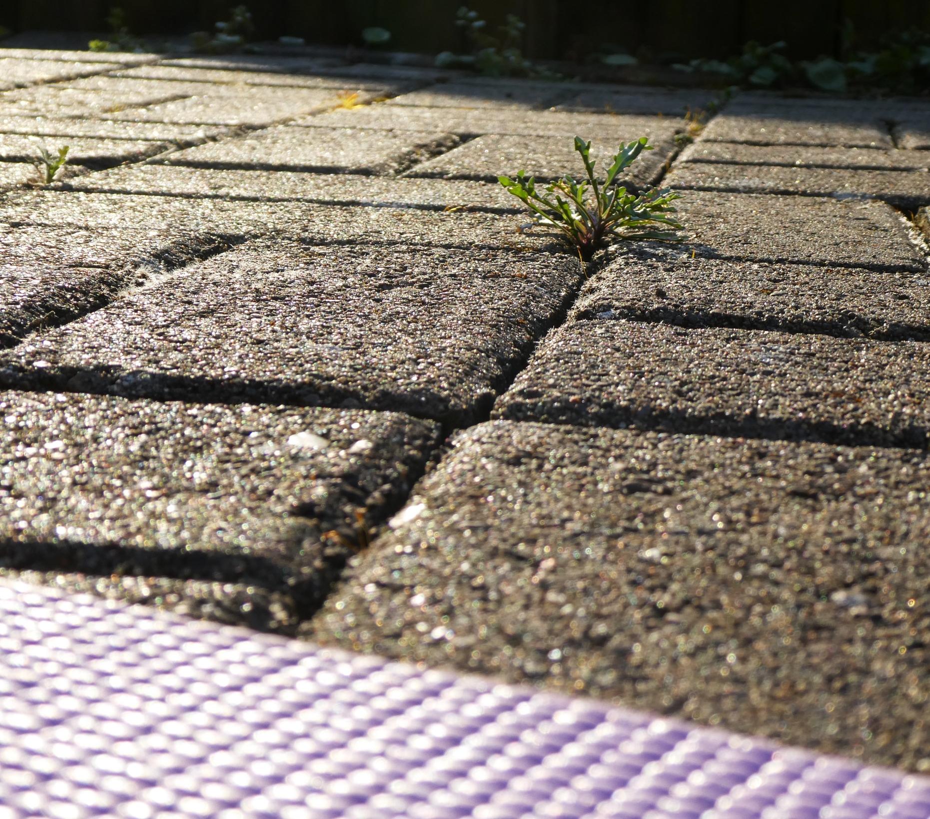 Gartenerkenntnisse Ruccola P1020268